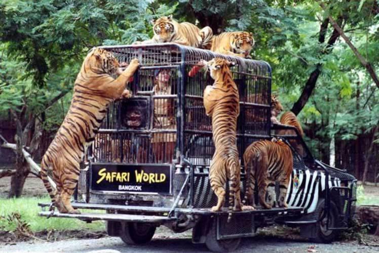 сафари бангкок