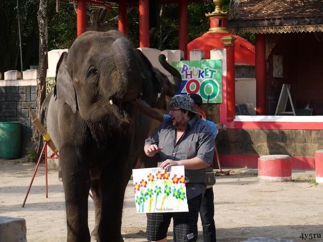 шоу слонов пхукет