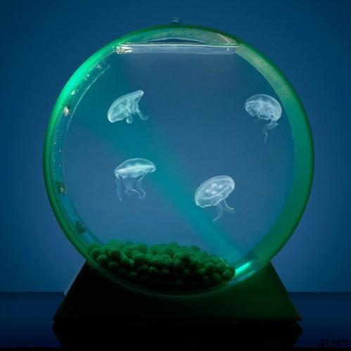 медузы в тайланде