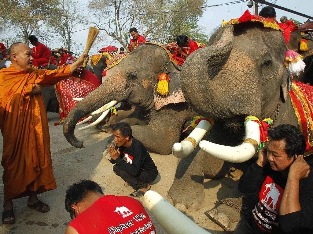 день слона таиланд
