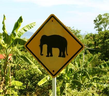 смерть от слона таиланд