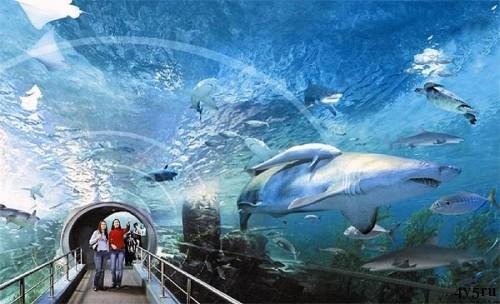 океанариум таиланд