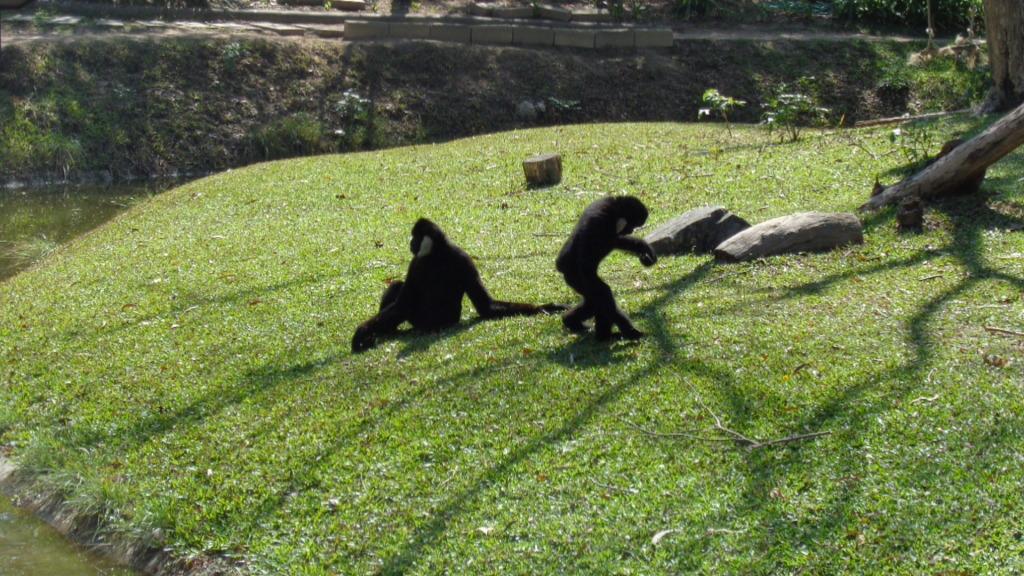 Зоопарк Кхао Кео