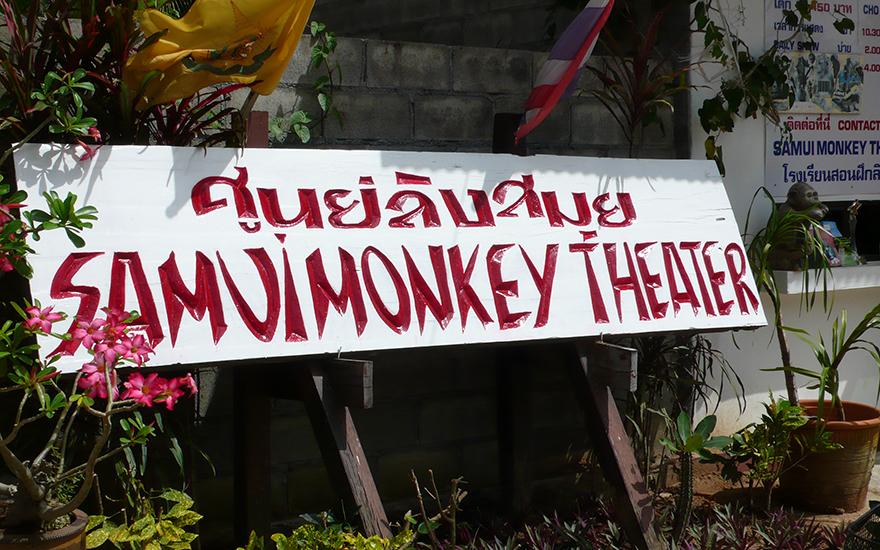 шоу обезьян самуи