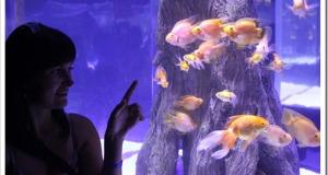 Большой аквариум на Маврикий