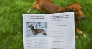 Как заполнить ветпаспорт собаки